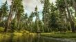 forest15deer_1920