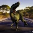 Austro-Dino