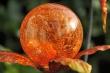 Orangener Orb