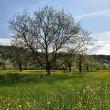 Frühling bei Oberlauchringen im April 2014