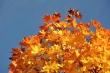 Goldenes Laub im Herbstlicht Nr. 5