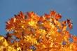 Goldenes Laub im Herbstlicht Nr. 6