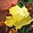 Herbstlaub im Oktober 2013