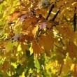 Herbstliches Blättergold 2013