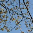 Blättergeäst