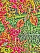 Psychedelischer Herbst