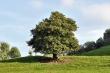 Mystischer Baum im frühen Herbst
