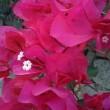 Sommerliche Blüten im November