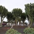 Beneidenswert große Topfpflanzen