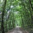 Waldweg Richtung Tiengen