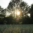 Sonnenglitzer im Baum