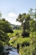 Sommer am Klingengrabengestade