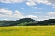 Kornfelder bei Oberlauchringen Nr. 4