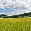 Kornfelder bei Oberlauchringen Nr. 3
