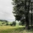 Pastorale Junilandschaft