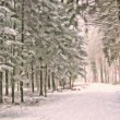 winterforest_1024