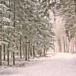 winterforest_1024