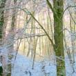 winterletter_1024