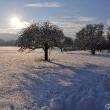 Januarsonne mit Obstbäumen