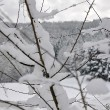 Verschneite Dornen