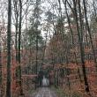Regenwetterwaldweg