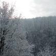 Silberwald im Januar