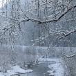 Wutach mit Schnee und Entlein