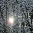 Winterwaldauge
