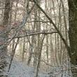 Geheime Waldbotschaften