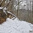 Felsen mit Schnee