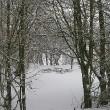 Camp Narnia