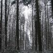 Im tiefen Wald!