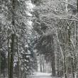 Winterszenerie