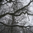 Winterbaumastwerk