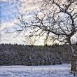 Winterlicher Baum, Reprise