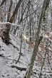 Winterwald mit Sonnenblick