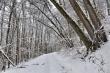 Verschneiter Winterwald