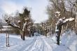Küssaburgweg im Schnee