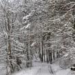 Wintermärchenwald, fotografiert von Martin Dühning