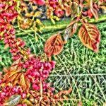 Feurige Herbstimpressionen