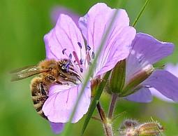 Mini-Biene mit Blume