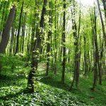 Der Wald der Träume