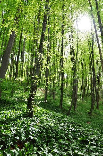 Sehr grüner Wald, fotografiert mit der Nikon D90