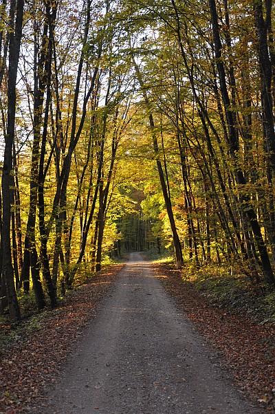 Herbstweg im Klettgau - prima geeignet zum Seifenkistenfahren...