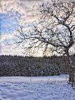 Und noch mehr neue Winterbilder…