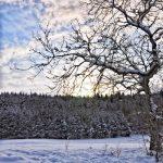 Und noch mehr neue Winterbilder...