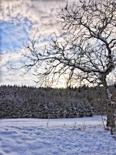 Ende Januar 2010 gibt es im Klettgau viiiel Schnee und auch schon wieder ein bisschen Sonne.