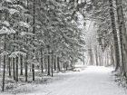Neue Winterbilder im Anastratin-Album