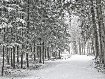 So schön kann Winter sein: winterlich verschneiter Wald bei Lauchringen, fotografiert von Hansjörg Dühning 2010.