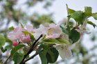Ein Hauch von Frühling 2010